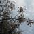 続々々々 NHK放送センター西口前の桜の木